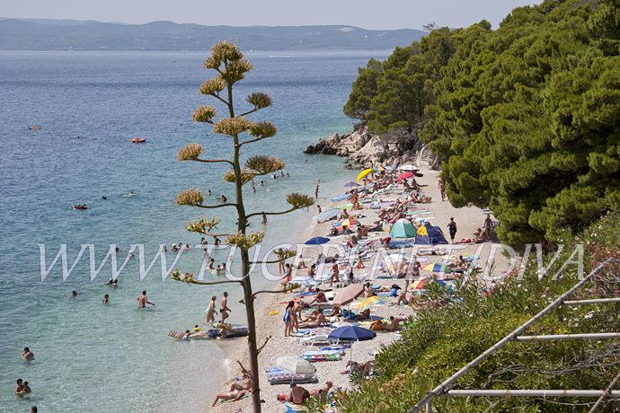natural beaches, pebble beach, pinetrees shadows