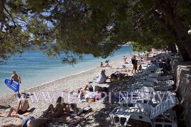 natural beaches hidden in deep pinetree shadows