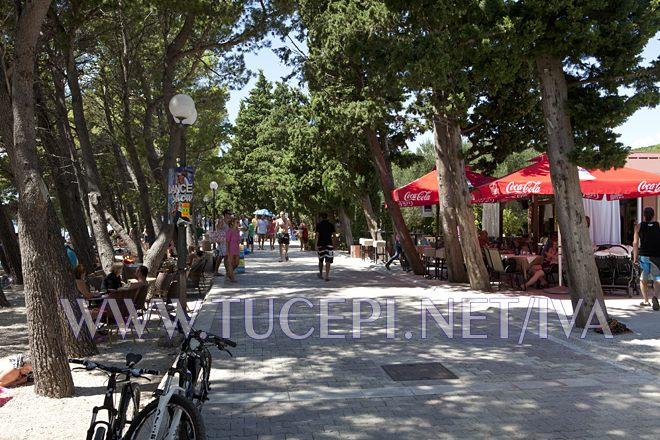 promenade in pinetree wood shadow