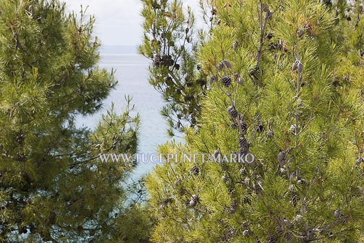 sea view from balcony - apartments Marko, Tučepi