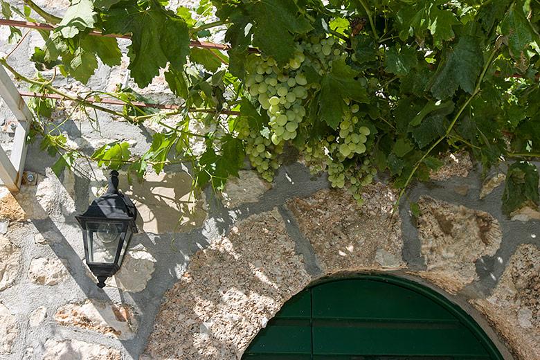grape above entrance door